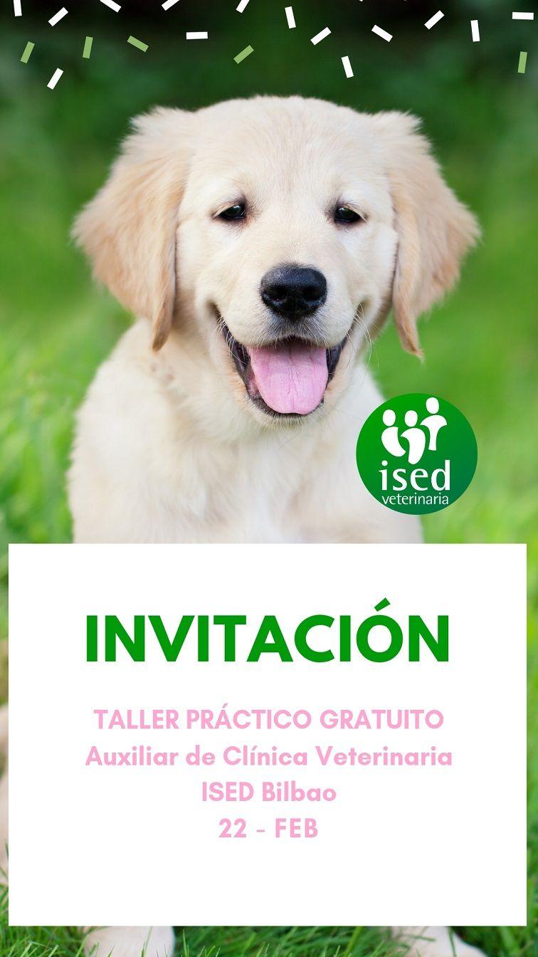 taller-auxiliar-clinica-veterinaria-bilbao-22-febrero-19