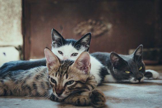 hogar-multigato-etologia-felina