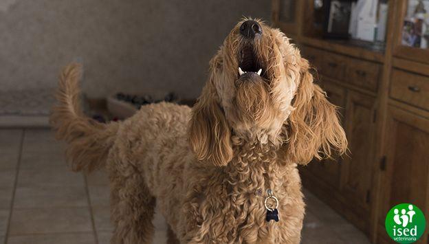 perro-ladrar-solucion