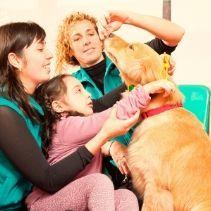 curso-intervencion-asistida-con-animales