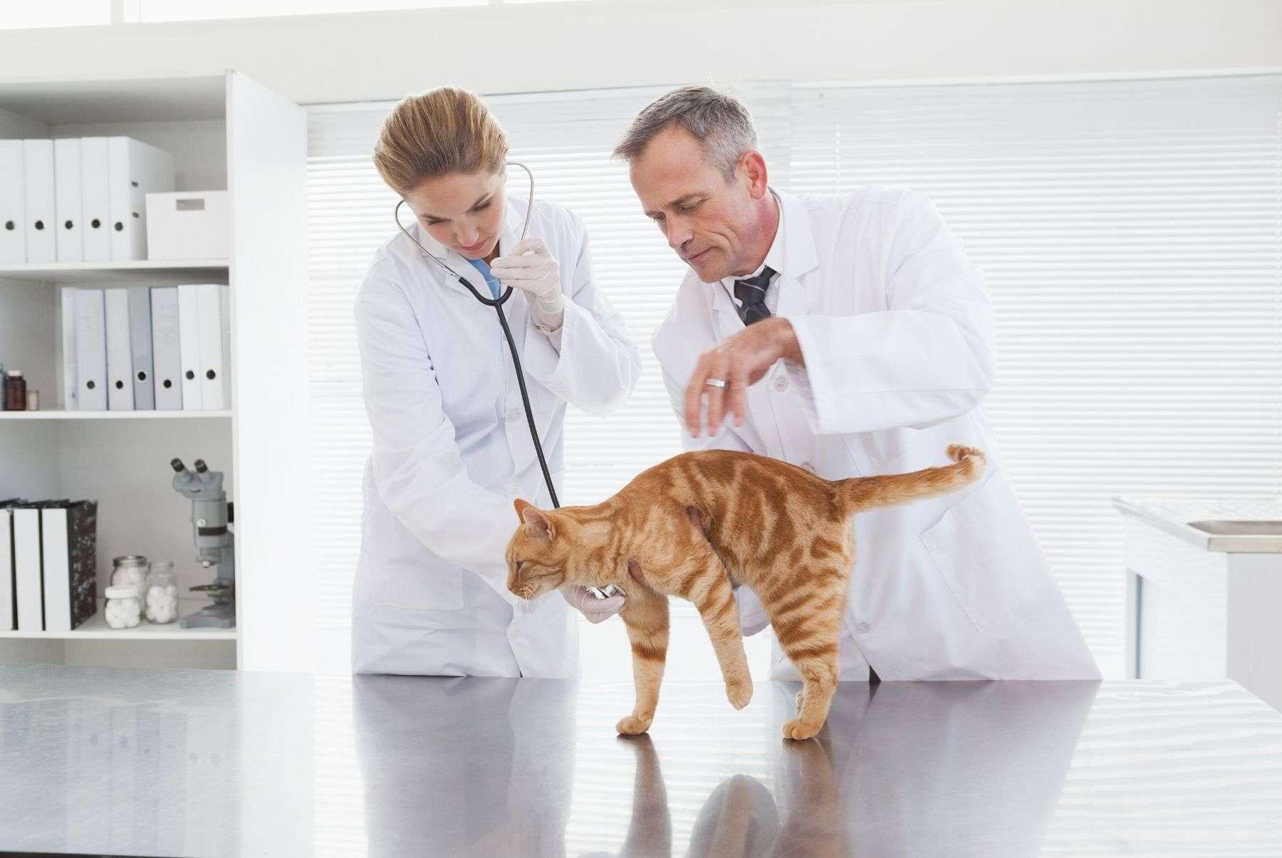 cursos-veterinaria-para-trabajadores-fundae