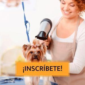 sesiones-peluqueria-canina