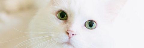 clinica-y-etologia-felina-header