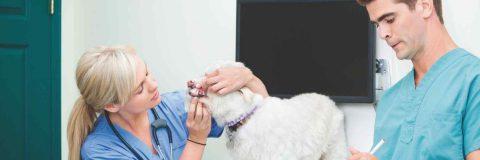 curso-auxiliar-clinica-veterinaria