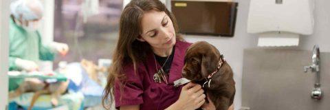 curso-auxiliar-tecnico-veterinario
