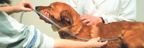 curso-ayudante-tecnico-veterinario-avanzado