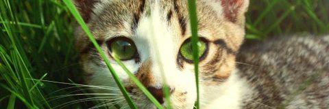 curso-clinica-etologia-felina