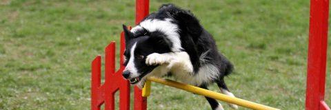 curso-educacion-canina-avanzada