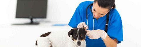 curso-enfermeria-veterinaria