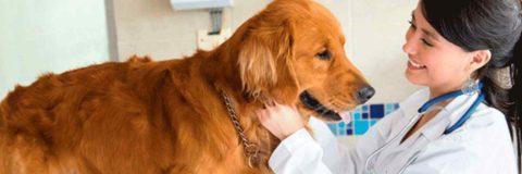 curso-etologia-clinica-veterinaria