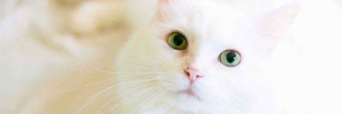 curso-etologia-felina