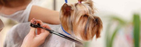 curso-experto-peluqueria-canina