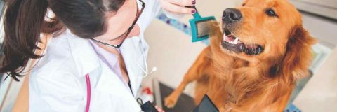 curso-peluqueria-estetica-canina