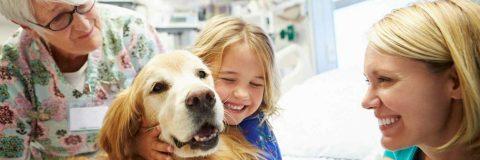 curso-tecnico-intervencion-asistida-animales