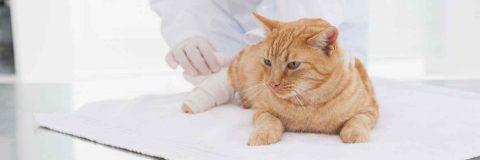 curso-tecnico-urgencias-cuidados-intensivos-veterinarios