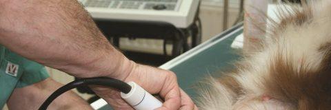 monografico-ecografia-clinica-animales
